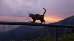 equilibrio-gatto