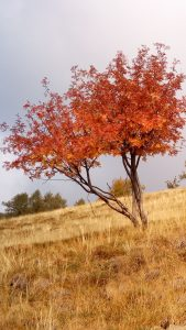come allenare la mente a pensare positivo-albero
